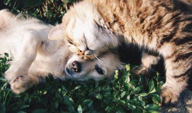 友達 猫と犬