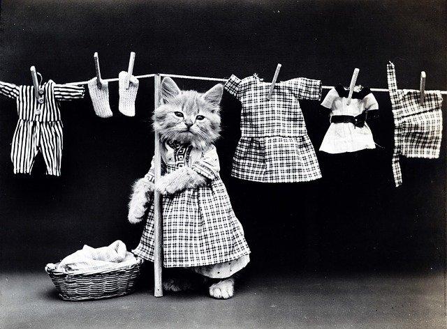 猫 洗濯 ドレス