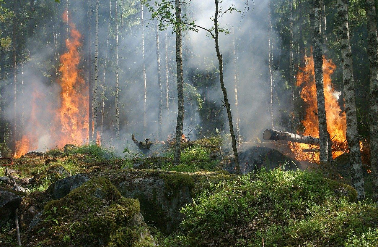 forest fire, fire, smoke