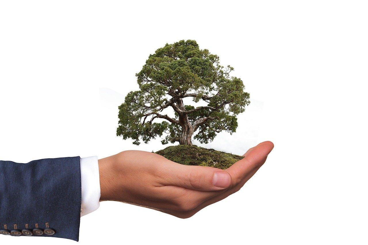 環境 木 自然